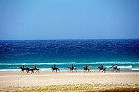 Arabian horses with riders at the beach (thumbnail)