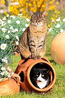 two domestic cats next to flowers