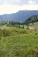 Meadow in a valley, selective focus