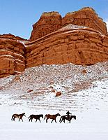 A cowboy leading his horses through the beauty of winter in shell, wyoming Shell, Whoming,  Usa