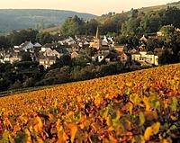 Pernand Vergelesses Nuits St Georges Cot-dor Borgogne France