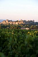 France, Languedoc, Carcassonne, castle walls from vinyard