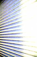Window blinds.