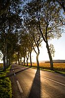 France, Burgundy, Cote d´Or, tree lined highway, autumn