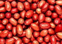 Pecan nuts. Pecans are the stones of the fruit of the pecan tree, Carya pecan, a member of the walnut family. Nuts are good sources of dietary protein...