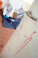 Murder investigation. Forensics officers bagging a corpse discovered in a house. The bloodstains on the door to the room will be analysed to help dete...
