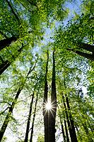 Sunlight shining through forest in spring, low angle view