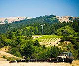 USA, California, Petaluma, truck on cattle ranch