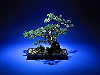 Bonsai tree, studio shot