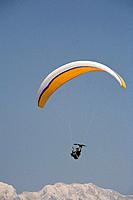 Man paragliding with an Egyptian Vulture