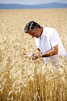 Man in a corn field, Carinthia, Austria