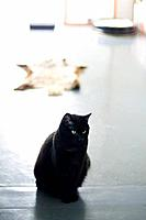 Black cat sitting on floor