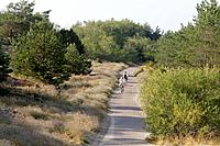 Cycling path along the Curian spit, Lithuania