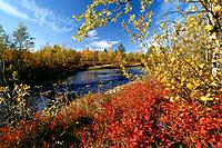 Shrubs and plants along the river, Finnish part of Lapland, Finland