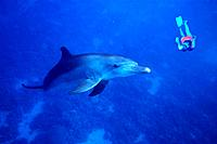 Diver meets dolphin, Soma Bay, Red Sea, Egypt