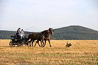 Horse and carriage with Stoppelsberg Mountain in the background, Haunetal, Rhoen, Hesse, Germany