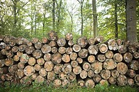 Pile of felled trees in forest