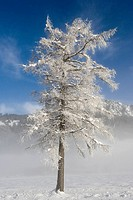 A bare tree covered in snow