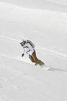 A woman snowboarding