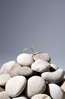 Sapling growing from rocks