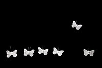 Butterfly flying away from others