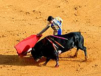 Bullfight, Seville, Andalusia, bullring