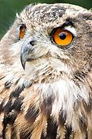 Owl named 'Moth' in England, UK