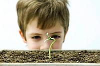 Boy looking at seedling, cropped view
