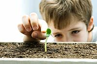Boy touching seedling, cropped view (thumbnail)