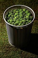 Dustbin filled with broccoli (thumbnail)