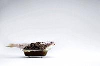Fish in a bathtub covered in soil