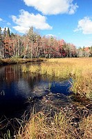 Pond in a forest, Kejimkujik National Park, Nova Scotia, Canada