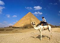 Man on camel in front of pyramid