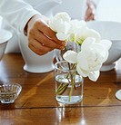 Placing peony flowers in a vase on the table