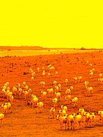 animals cattle having pasture