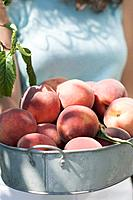 Woman holding fresh peaches in metal container