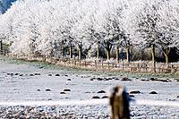 Germany, Lower Saxony, Vahrendorf, winter scenery