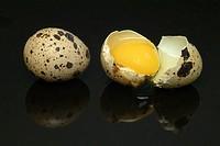 fresh quail eggs, food, uova di quaglia