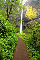 Latourell Falls, Columbia River Gorge, Oregon, USA