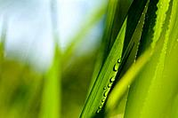 Close_Up Of Grass