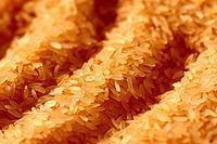 Rice, Caxias do Sul, Rio Grande do Sul, Brazil