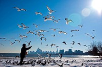 Man feeding seagulls by sea with cityscape in background