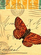 An old envelope with stamps from France, handwriting, and a butterfly