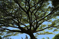 Tree, Maui, Hawaii, USA