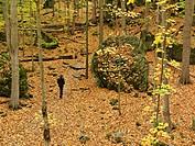 Canada Ontario Niagara Falls the Niagara Glen person walking in a forest in autumn