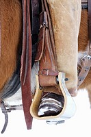 Close up of a cowboy with his foot in the stirrup, Shell, Wyoming