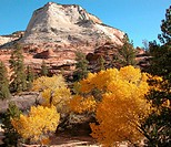 Fall Colors in Utah
