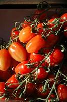 Bologna Italy, tomatoes
