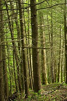 Trees, Whiteoak Sink, Spring, Great Smoky Mountains National Park, TN, USA