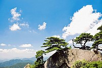Trees on a mountain, Huangshan, Anhui province, China